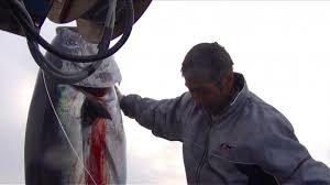 山本秀勝(大間マグロ漁師)の現在の年収と船の値段は?離婚と悲運の理由とは?